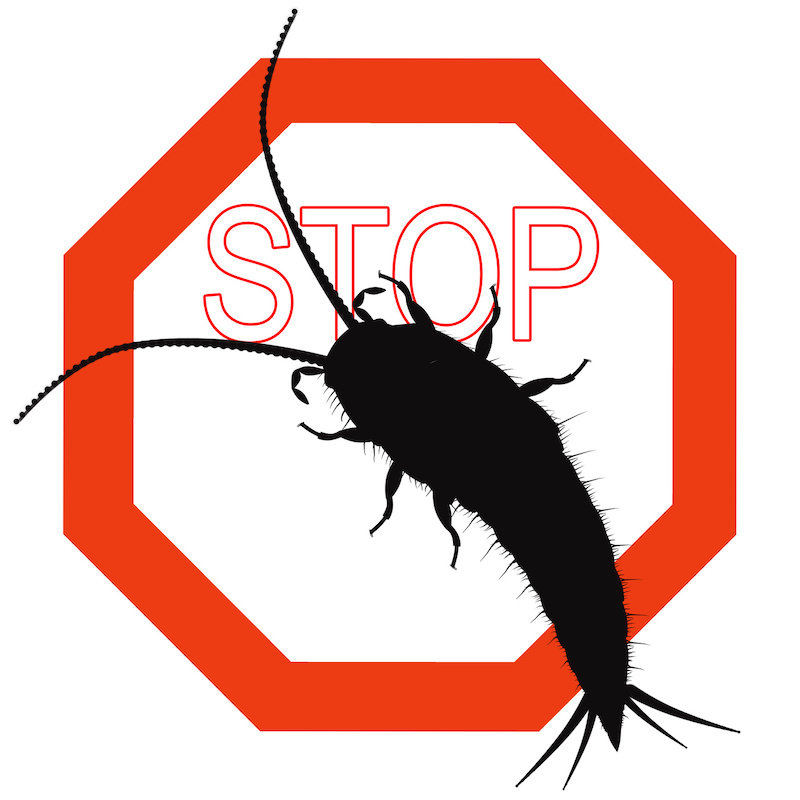 How to Prevent Silverfish From Occupying Home