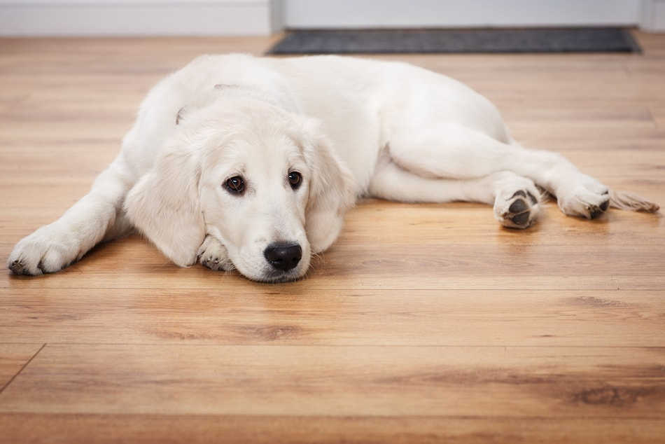 Dog Owner Tips for Selling Home