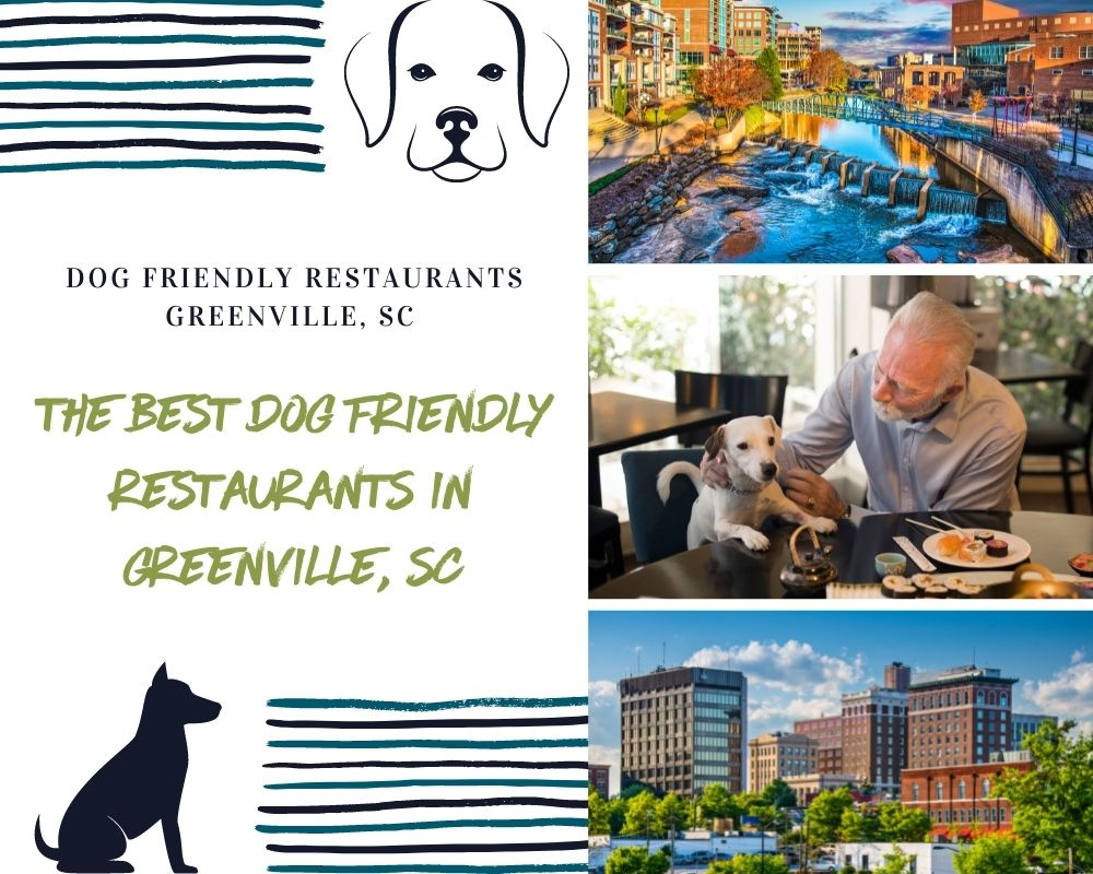 Photo of man and dog and places in Greenville South Carolina