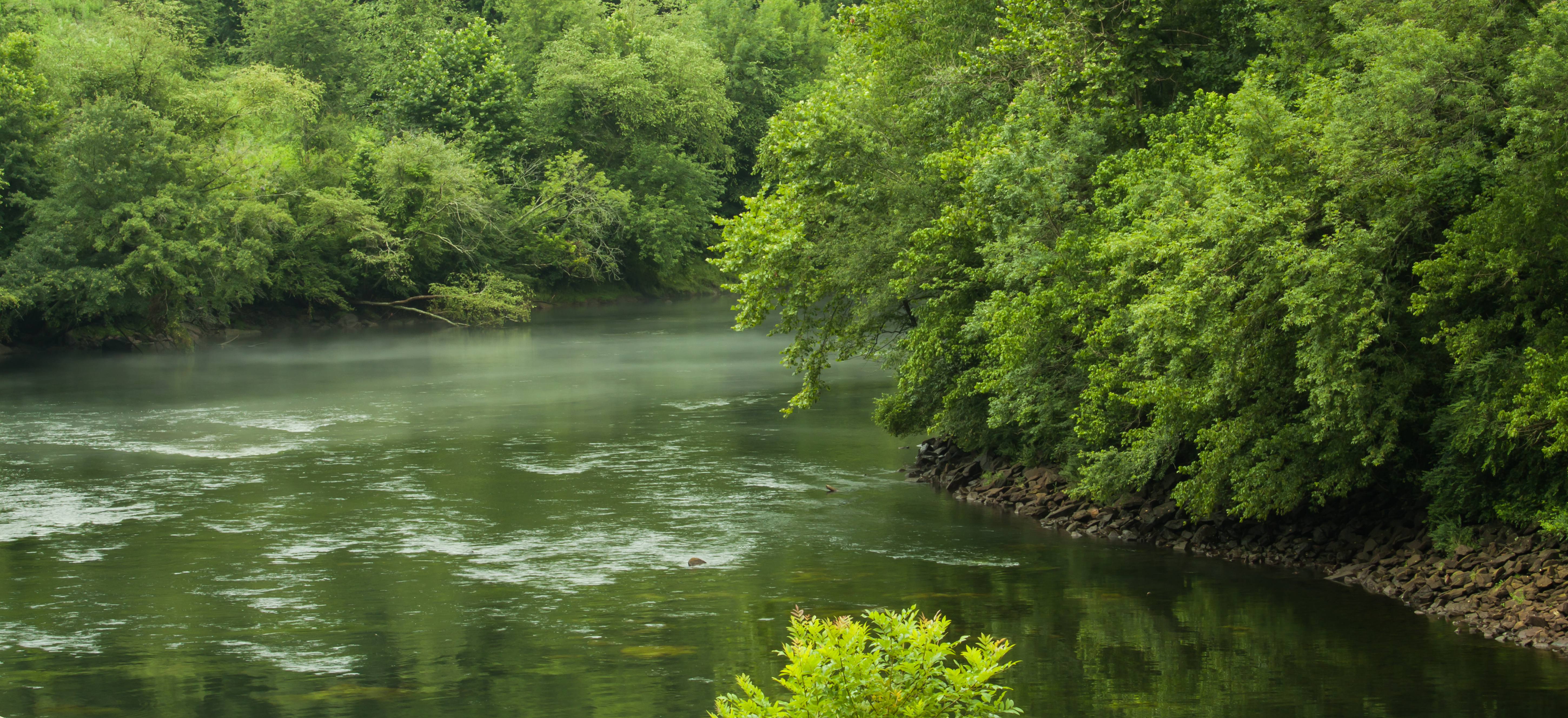 chattahoochee river with trees