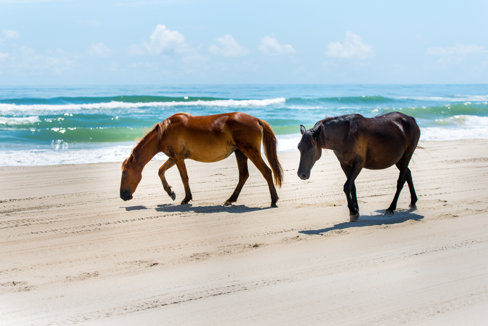 Horses on the Beach with Ocean in the Background