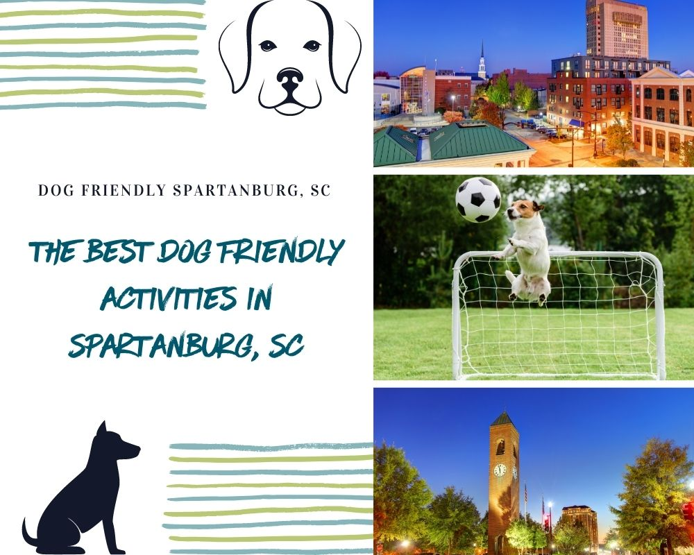 Photos of Spartanburg and dogs playing
