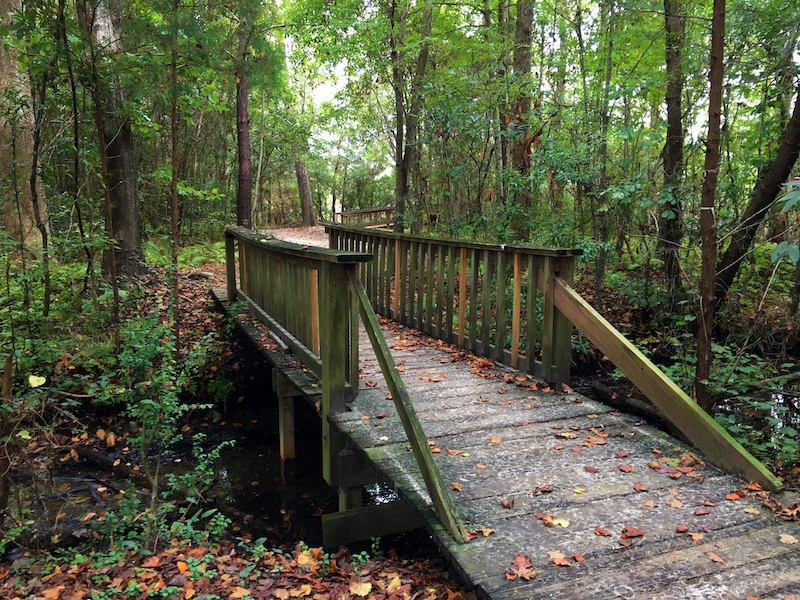Nature Trail with Bridge and Trees