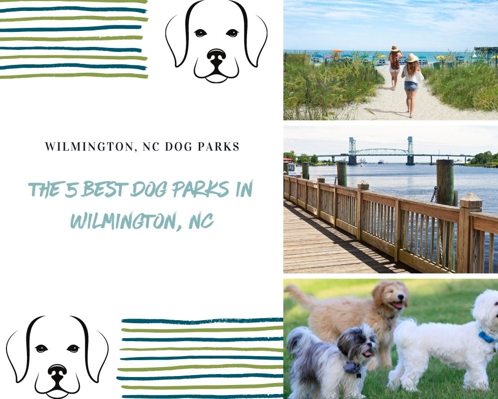 Photos of Dogs and Wilmington North Carolina places