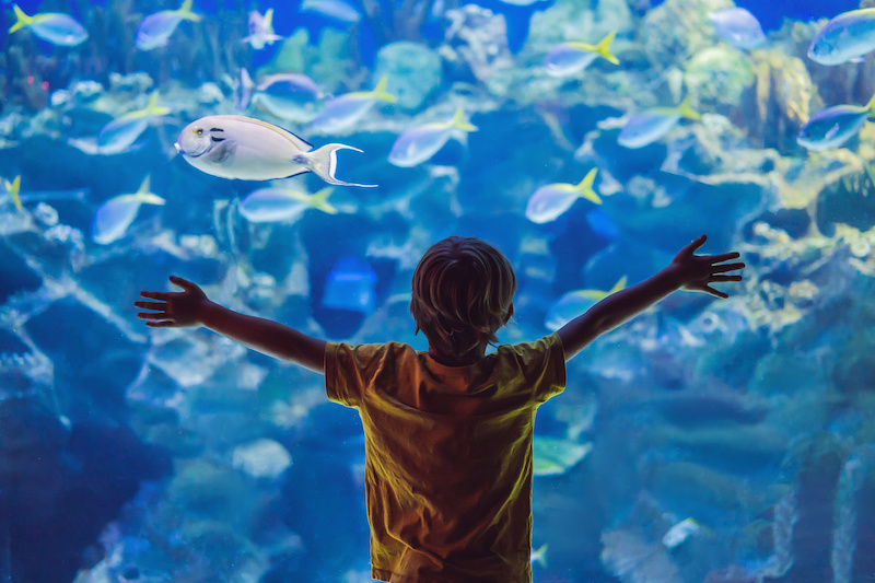 Ripley's Aquarium in Myrtle Beach