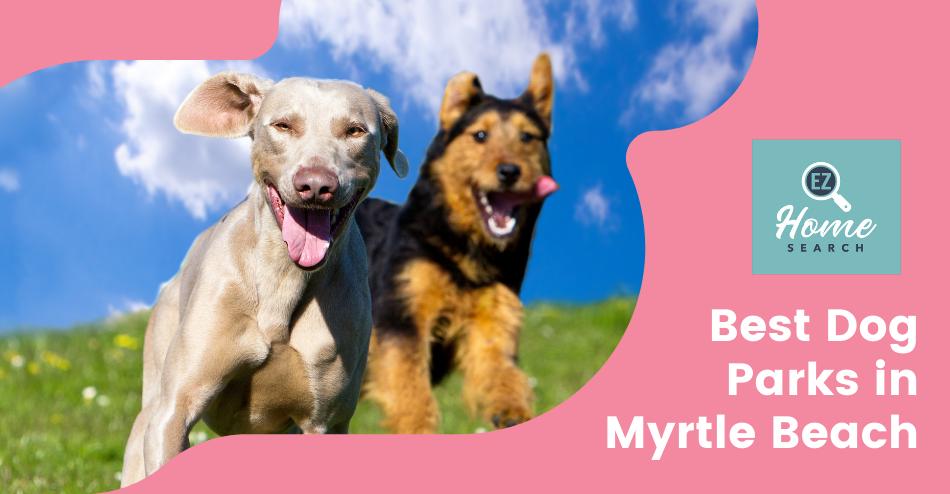 Best Dog Parks in Myrtle Beach
