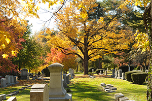 Lexington Cementary in Fall with Yellow Leaves on the trees