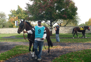 picture of horse at keeneland