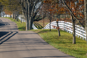 Road in Versailles with 4 plank white fencing