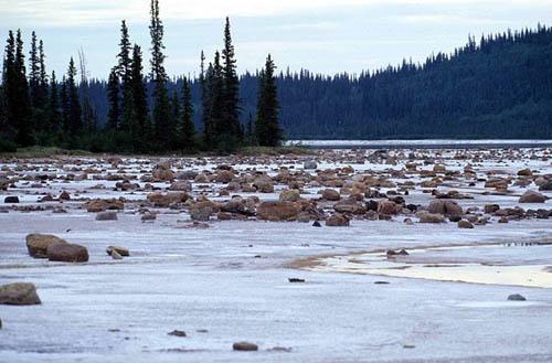Photo Credit: http://en.wikipedia.org/wiki/File:Wood-Buffalo-NP_Gros_Beak_Lake_2_98-07-02.jpg