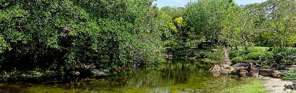 Natural Scenery in Boca Bridges
