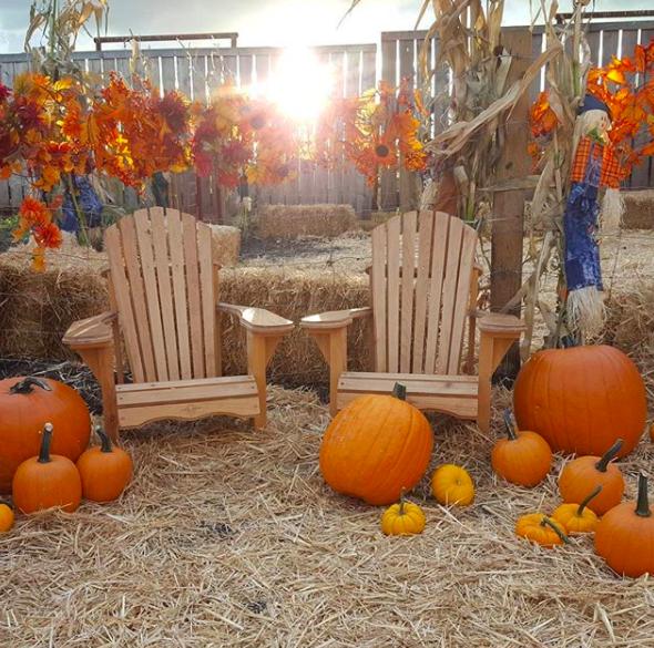 Pumpkin festival at Calgary Farmyard