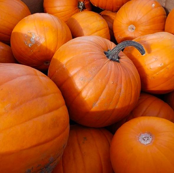 A pile of pumpkins at Blue Grass Nursery in Calgary, Alberta