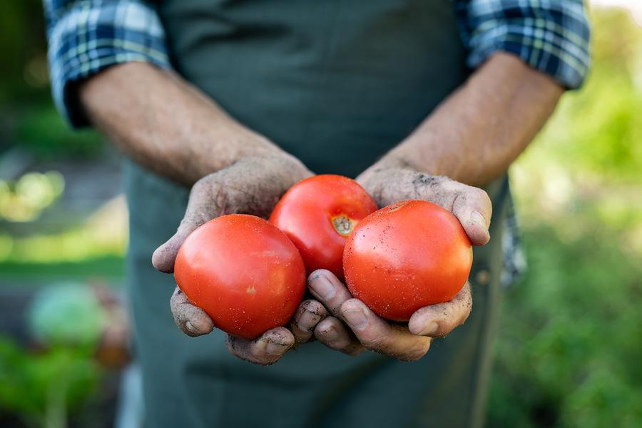 Anoosh Bistro Summer Tomatoes