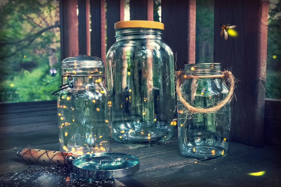 Bernheim Forest Firefly