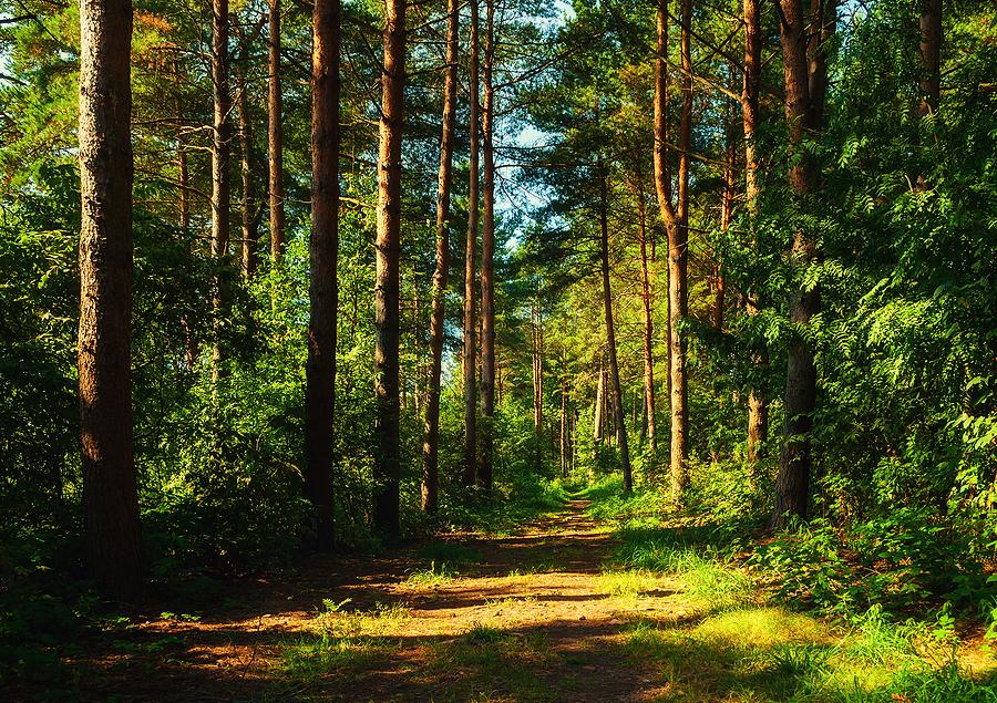 Bernheim Forest Forest Giants