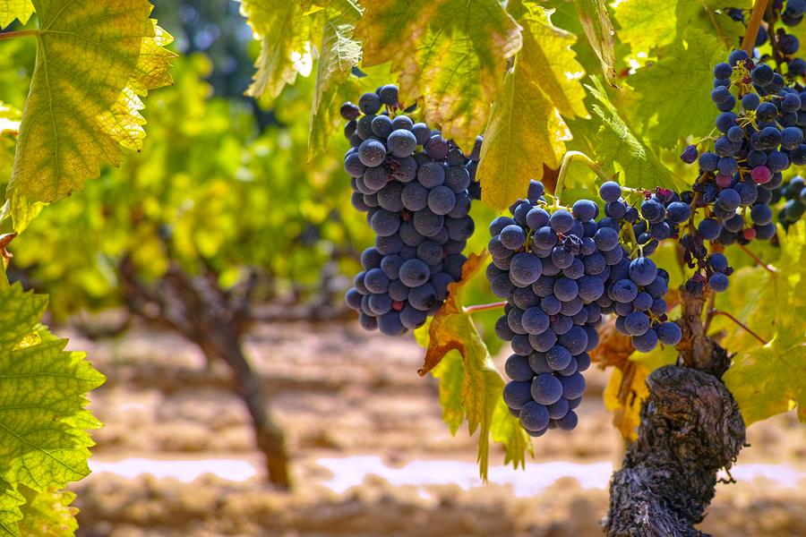 Brasserie Provence French Wine Tasting