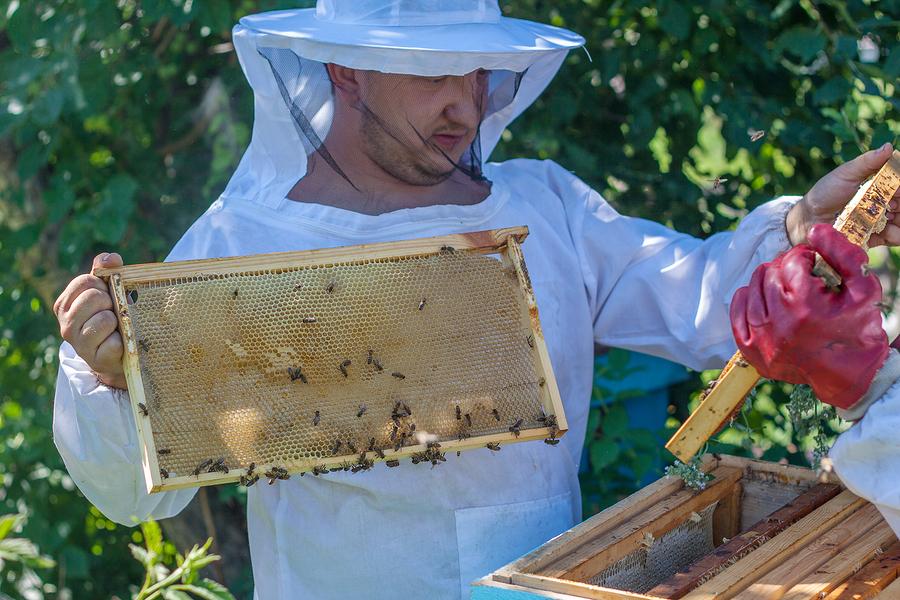 Creasey Mahan Nature Preserve Bee Hive