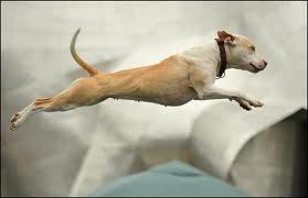 Dog Jump Contest