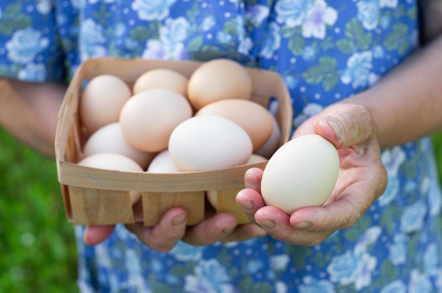 EggFest Louisville 2019