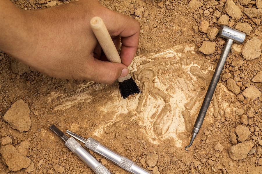 Farnsley-Moremen Riverside Landing Archeology