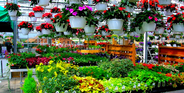 Gardening In Louisville Four Gardening Centers To Visit For Tips