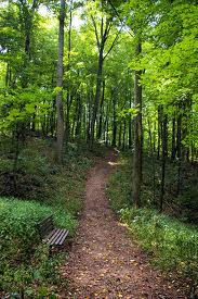 Hike Moremans Hill in Jefferson Memorial Forest