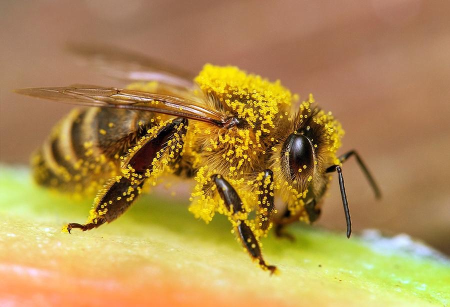 Honey Depot