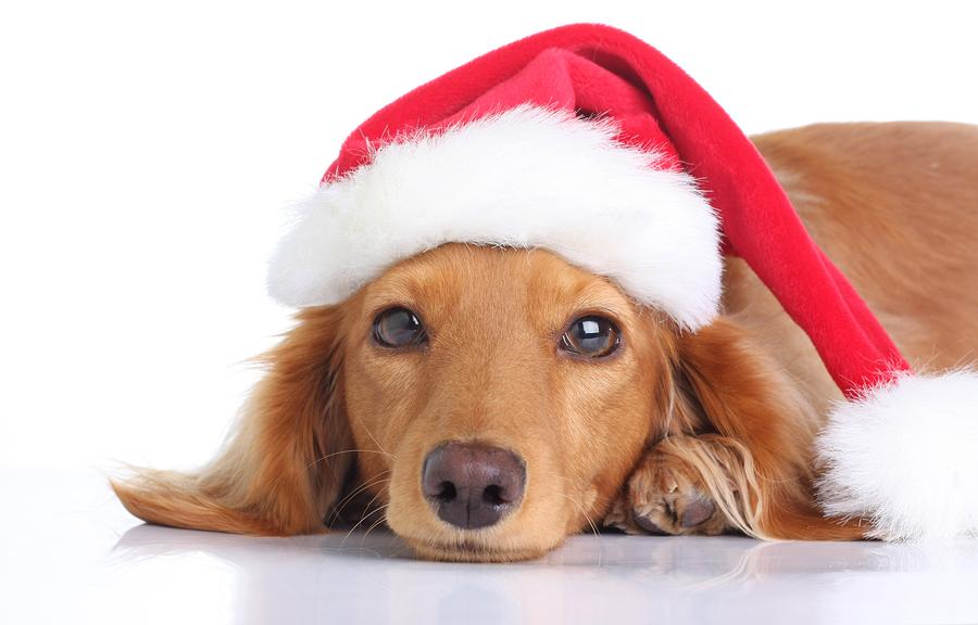 Humane Society Santa Paws