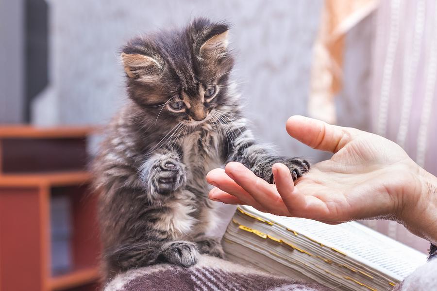 Kitten Shower Louisville Metro Animal Services
