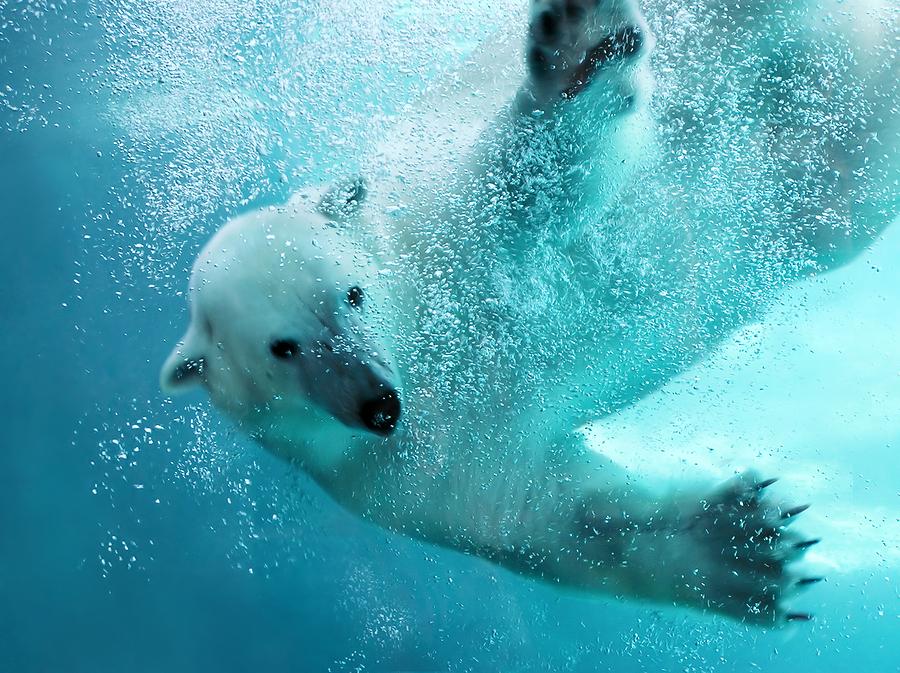 Louisville Polar Plunge 2016