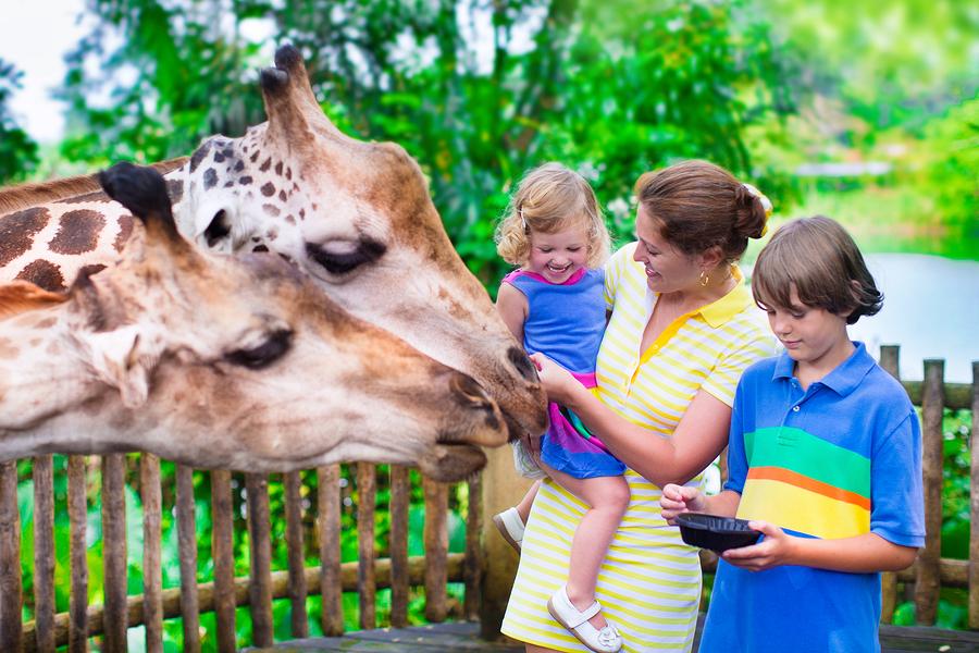 Louisville Zoo 2016