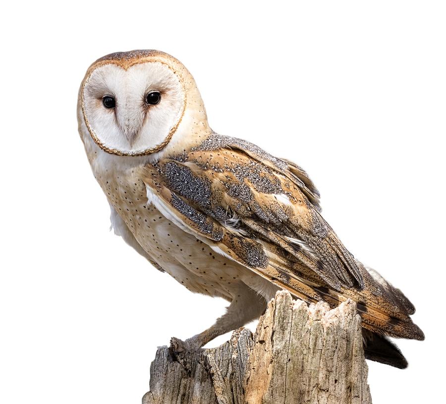 Owl Hike
