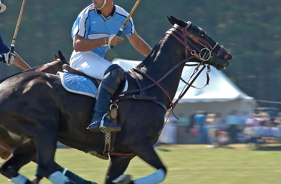 Polo at Waterfront Park