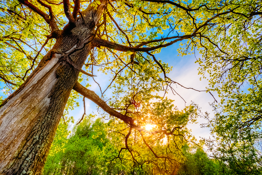 Tree Triage in Cherokee Park