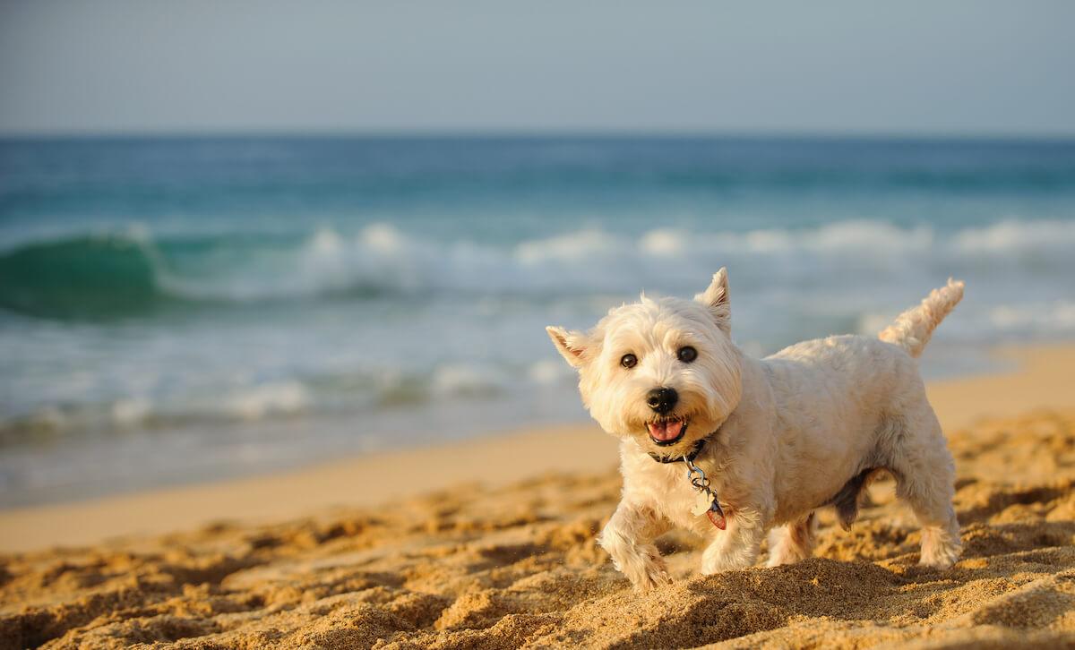 dog park Daytona Beach FL