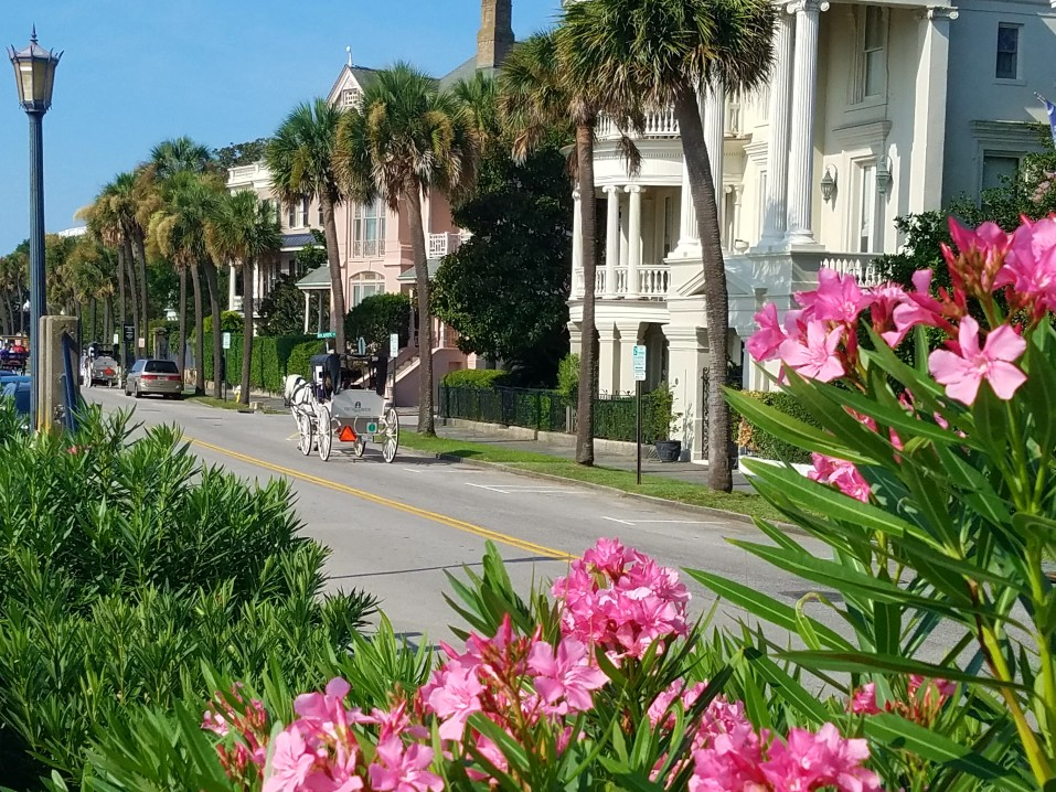 carriage-horses-magnolias-sc-charleston-battery-district