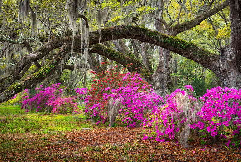 Hanahan weeping willow and beautiful flowers