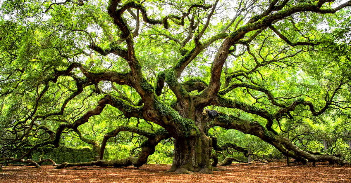 Angel Oak Park Johns Island South Carolina