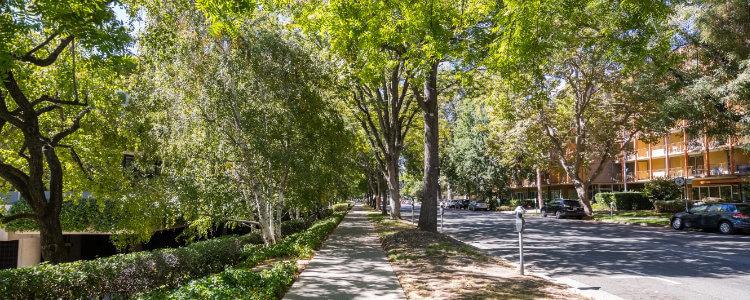 Sacramento Trees