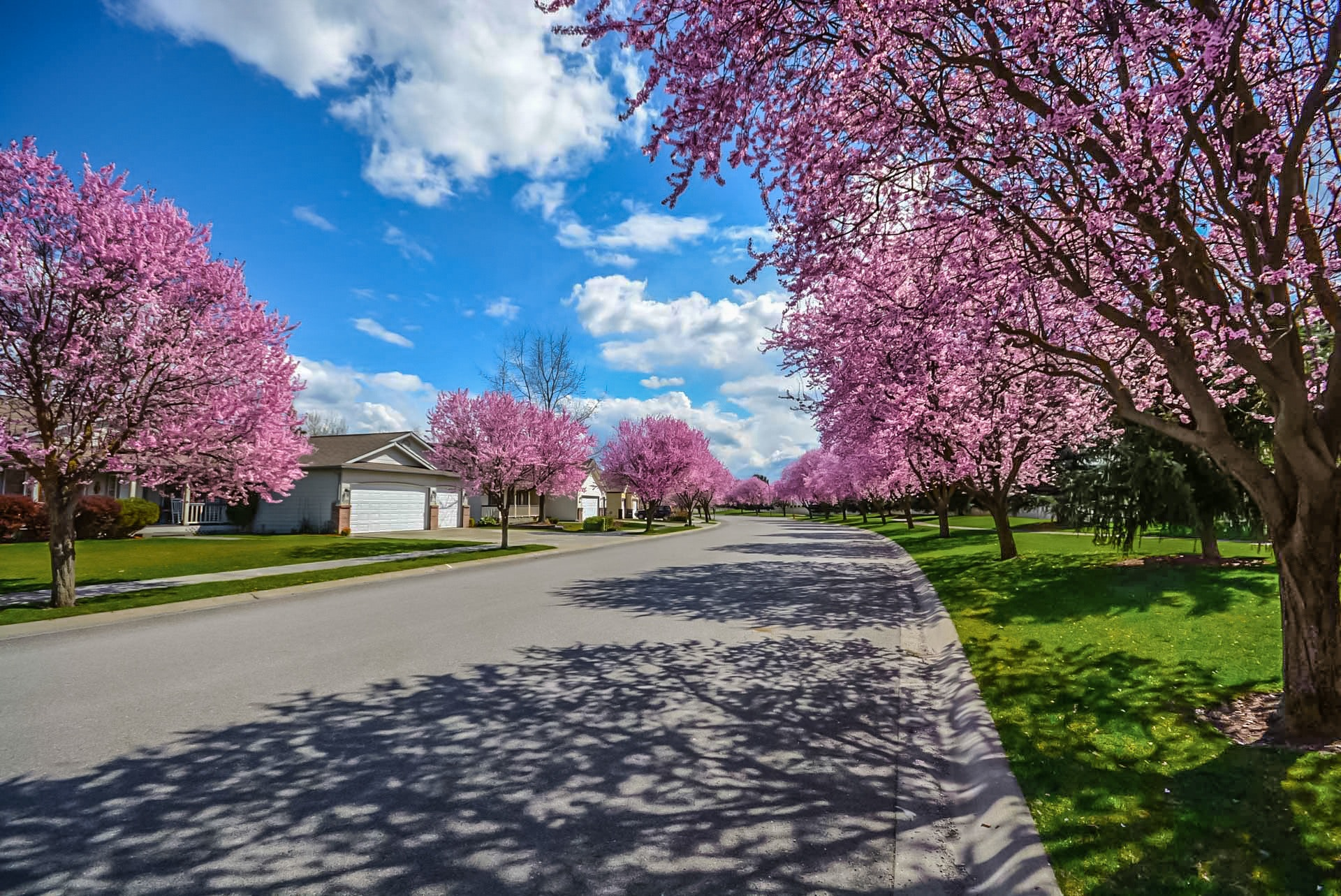 There are many benefits to adding some trees in your yard!
