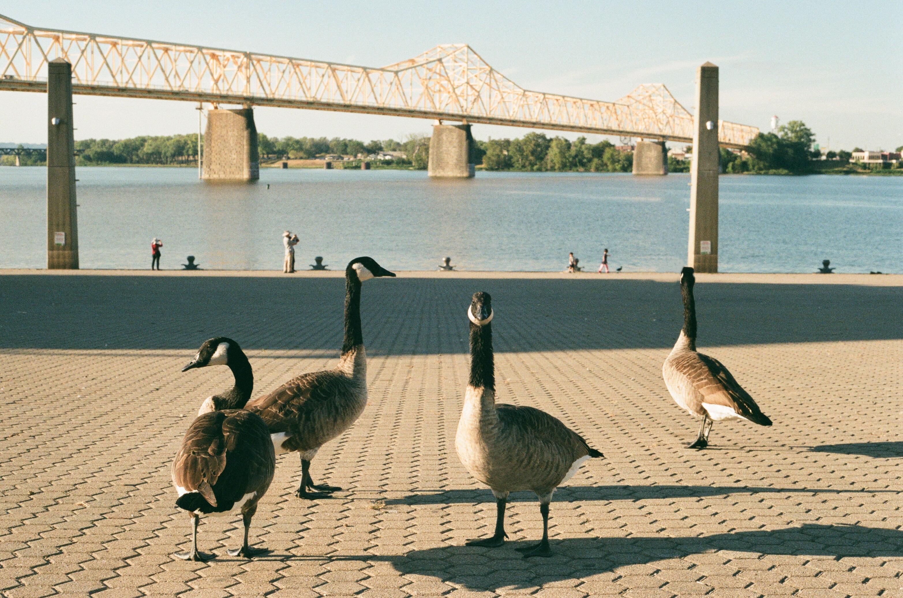 Louisville bridge in background
