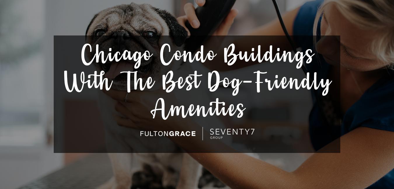 Chicago Condo Buildings Best Dog-Friendly Amenities