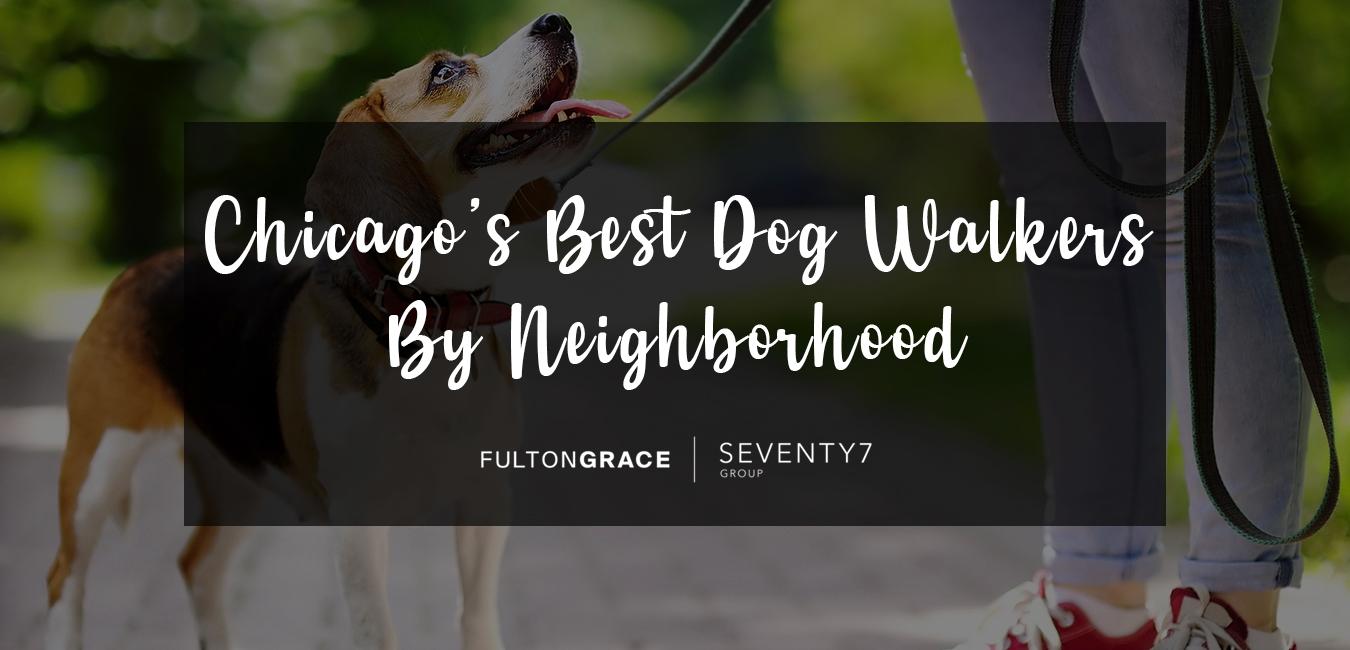 Chicago's Best Dog Walkers By Neighborhood