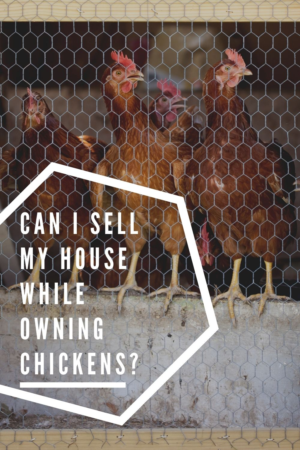 Can I Sell My House While Owning Chickens?