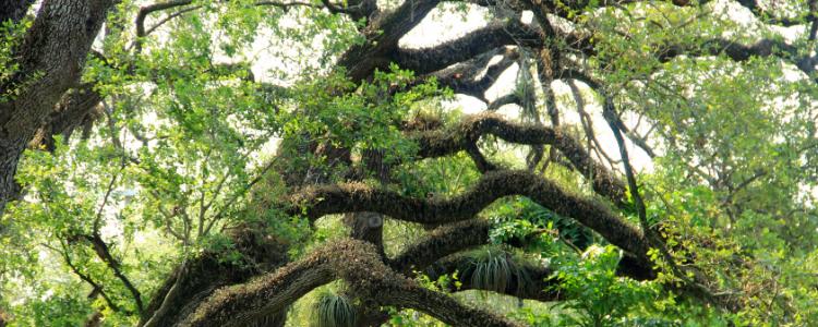 Botanical Paradise