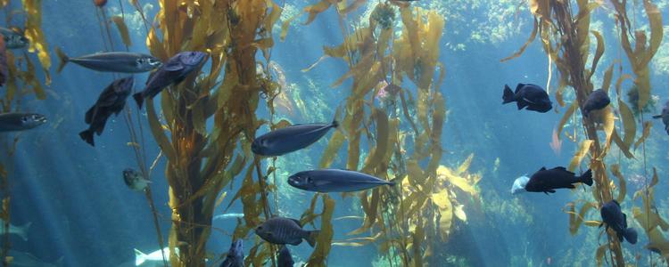 Birch Aquarium San Diego