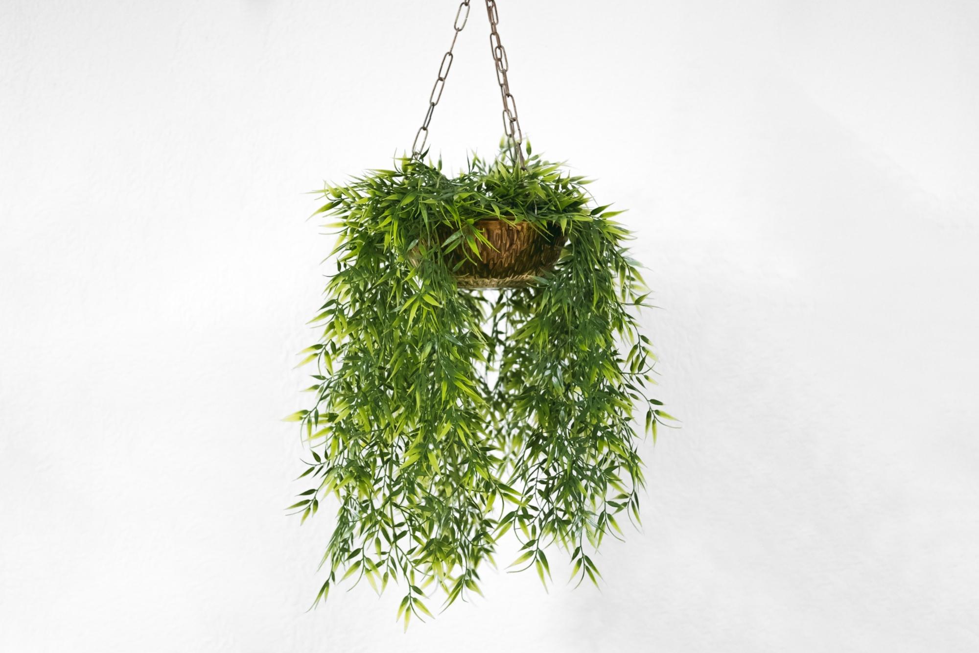live hanging plant