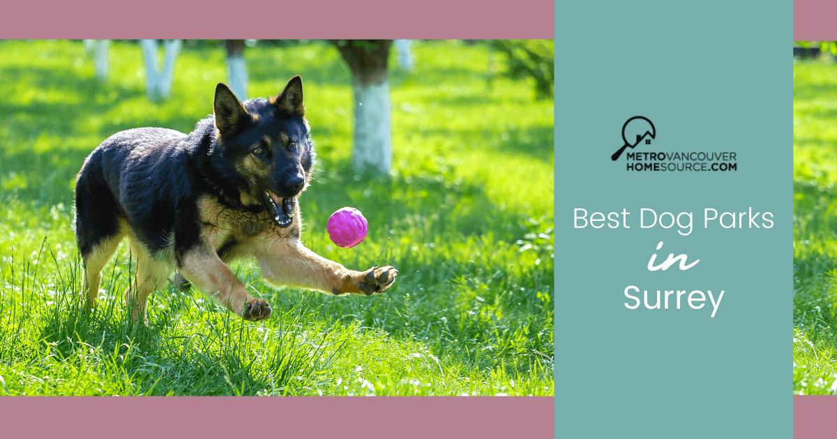 Best Dog Parks in Surrey