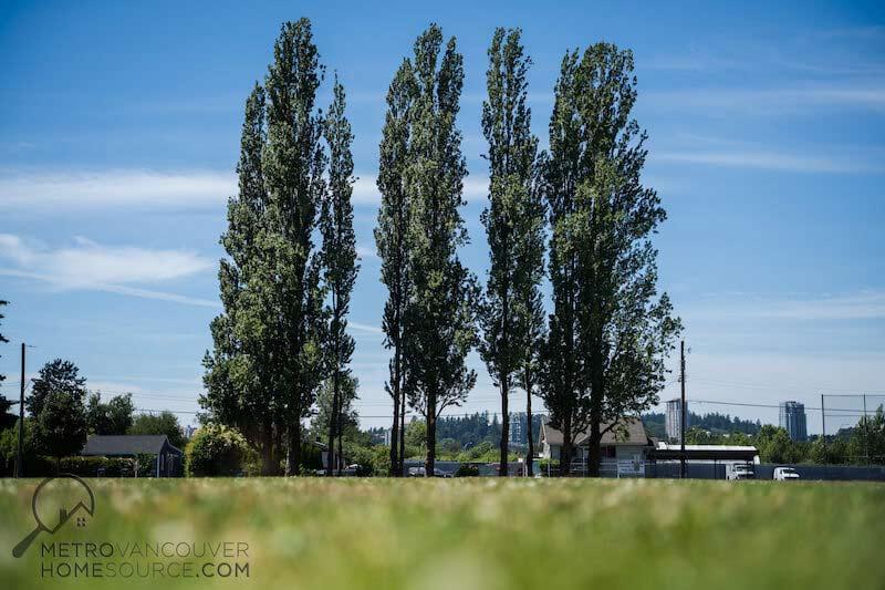 Bridgeview Park Trees in Bridgeview, Surrey, British Columbia